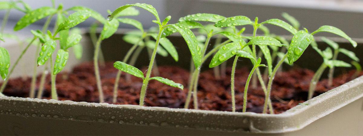 Теплица для выращивания рассады на продажу