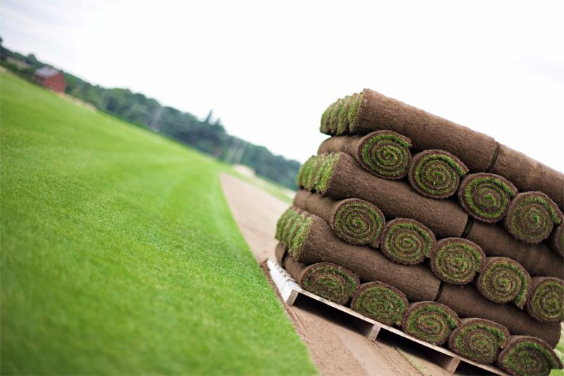 Выращивание газона бизнес идея бизнес план шугаринга