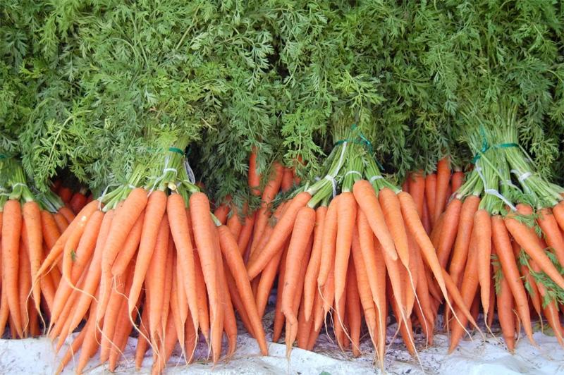 Изображение - Выращивание моркови как бизнес vyrashhivanie-morkovi-01