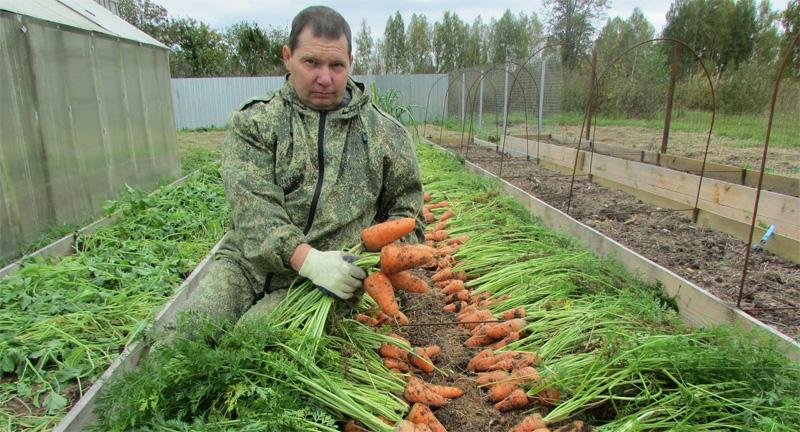Изображение - Выращивание моркови как бизнес vyrashhivanie-morkovi-03