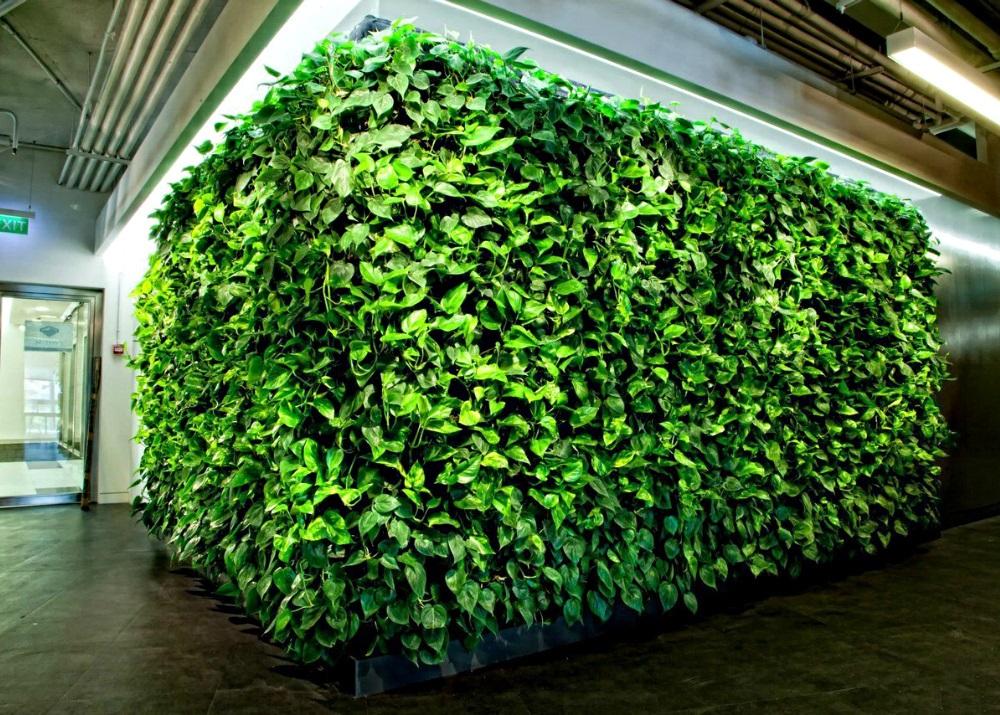 Создание стен из растений