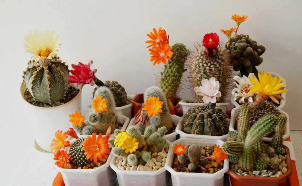 Выращивание кактусов и экзотических растений на заказ